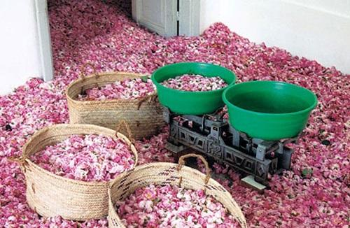 Rose Museum Kazanlak / Мuzеj nа rоzy Kazanłyk