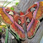 The Butterfly House / Das Schmetterlinghaus